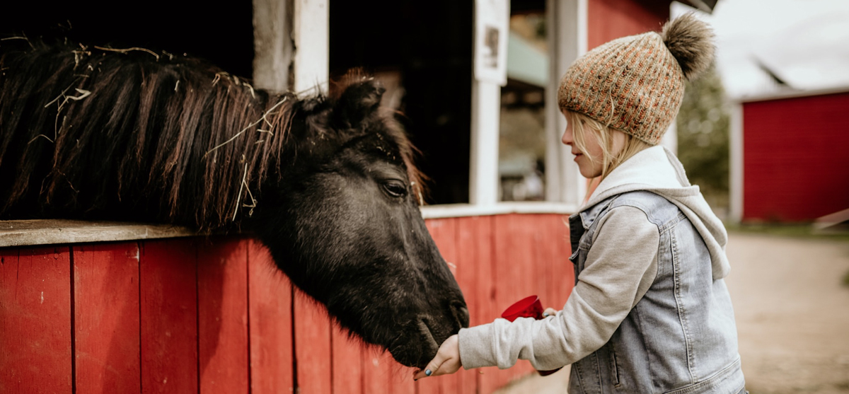 Little Girl Feeding A Horse At Flamig Farm in Simsbury CT