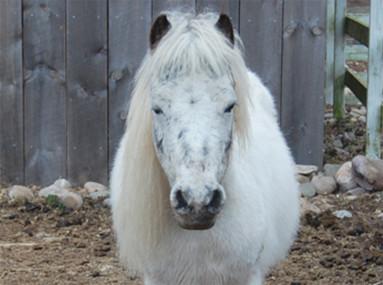 Flamig Farm Ponies